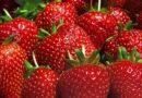 Pendapatan Turki dari Eksport Strawberi Meningkat 135 Peratus Berbanding Tahun Lepas